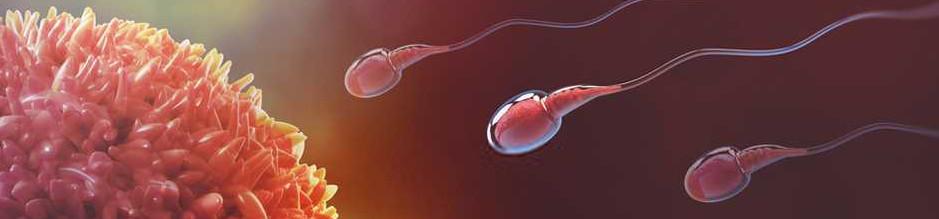 Valle del Sacco: dati preoccupanti sull'infertilità dei giovani maschi